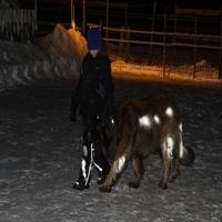 Imagem de Spray Pets and Horse